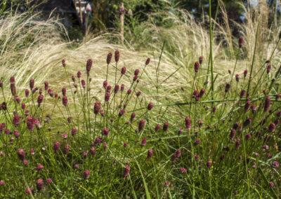 Gräser und Blüten
