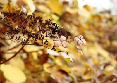 Die Bienen flüchten
